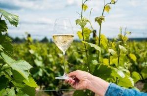 Ridgeview Estate Winery LTD
